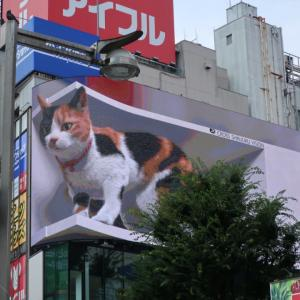 新宿の飛び出す猫♪