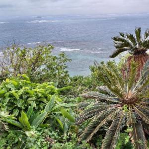 緊急事態宣言の再延長@沖縄。お隣の台湾では急激に感染者が減っているのに、日本は・・・。