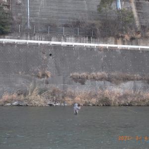 愛媛県の加茂川にノーキル推奨区間が設置されます。