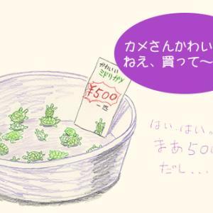 5.カメは日本を出国する際、検疫の必要がない