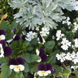 お花に優しい季節~*