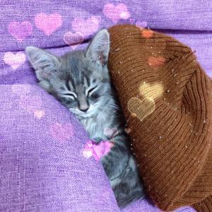 保護猫4匹の過去と現在を一気見❗️可愛すぎる子猫達❤️
