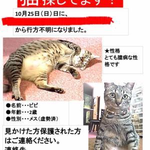 【ネコの行方不明事件】