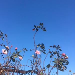 立春を迎えて庭の花たちは?