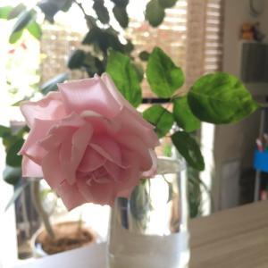 バラの新苗に花を咲かせない理由は? 庭の波動の良し悪し