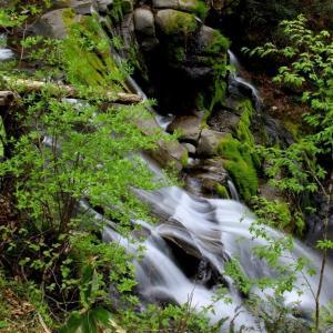 新緑萌ゆる羽鳥湖高原~立矢川の滝 上段ひょんぐり滝右岸 ③