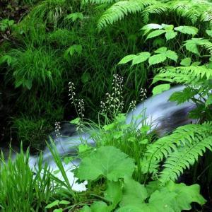 初夏の裏磐梯・苔に潤う幽玄の沢めぐり~猫魔沢 ⑦