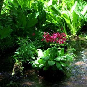 初夏の裏磐梯・苔に潤う幽玄の沢めぐり~清水沢 ⑧