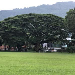 「 この木なんの木、気になる木 ♫ 」
