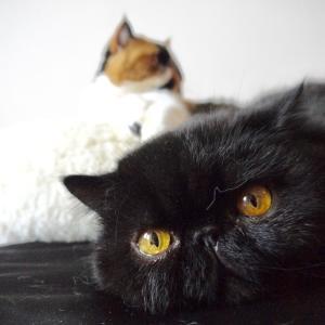 新猫あけましておめでとうございます