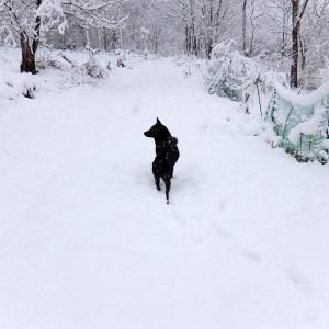 雪の朝 2 雪遊び?