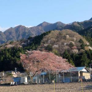 """甲ちゃん家(里山)も""""春""""【2】"""