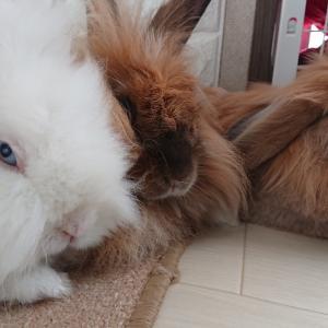 ポカポカ陽気で寛ぐウサギ