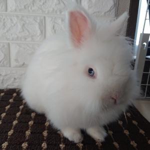 ウサギに見つめられて癒されてます