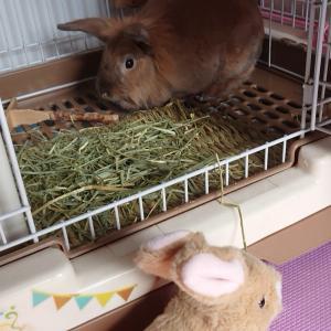 わが家にウサギがやって来た