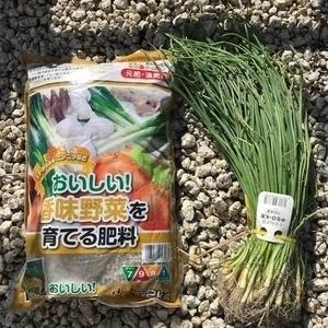 【家庭菜園・趣味】今年も玉ねぎを作ろう!どっさり収穫するぞ~♪