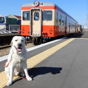 Codey・・電車に乗る!