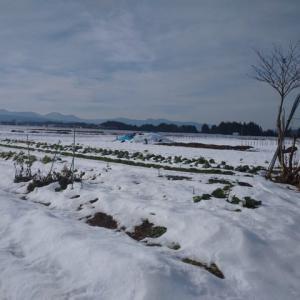 段丘は雪景色