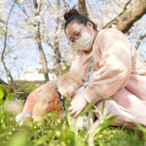 桜のお散歩④
