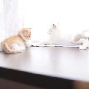 チビニャンの猫風邪