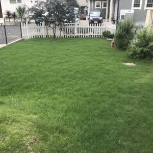 おっさんは、お庭に芝刈りに~