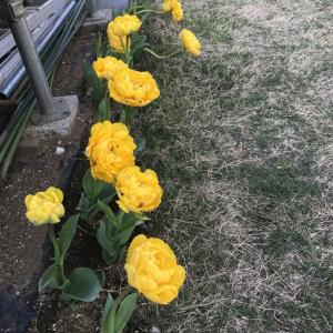 どんどん花が咲いてきた