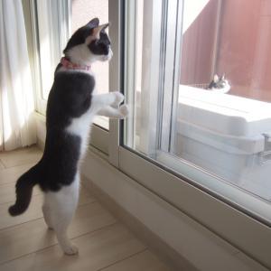 トレーニングを終えた猫だけですよ~!