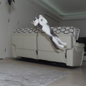 セナのジャンプが止まらない!