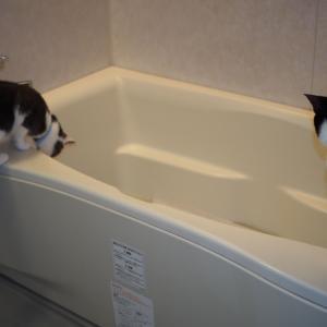 ラグを洗ったら...
