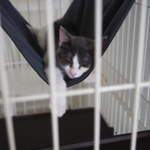 アスリート猫2世誕生!