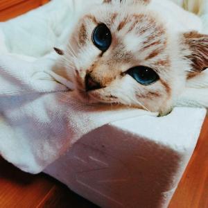 猫にも出会える有難い場所