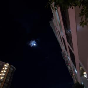 今宵の月の優しさのように