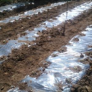 秋野菜が育ち始めました。
