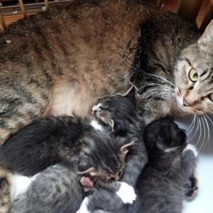 近所の野良猫が子どもを生んでしまって…
