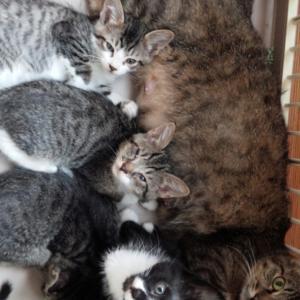 しまちゃんと4匹の子猫