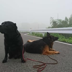 すごい霧だね