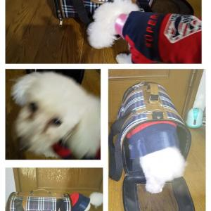 犬用バッグ