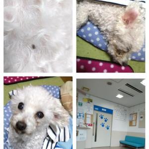 動物病院に行ってきました。