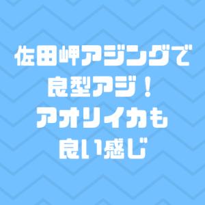 佐田岬アジングで良型アジ!アオリイカも良い感じ