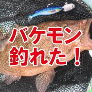 津島マリンのレンタルボートで秋のオオモンハタ青物狙い!やってもた!