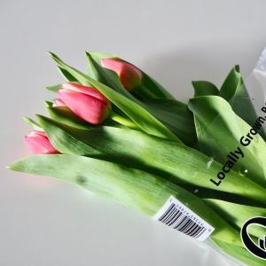 200円に見えない!IKEA春の新商品。おしゃれなガラス花瓶でチューリップを愛でる。