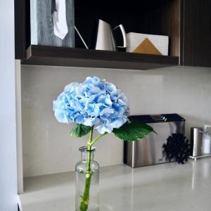切り花のアジサイを長持ちさせたい!私が実際試して1週間以上楽しんだ方法。