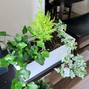 インテリアグリーンに癒されながらバルコニーディナー。そしてこの夏引っ越します!