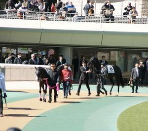 レイコックアビー、東京4R3歳未勝利戦5着