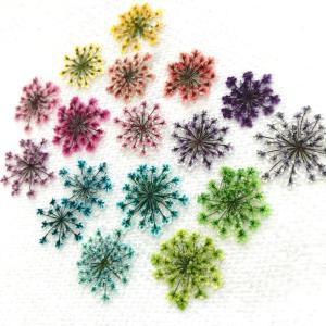 念願の‼︎手作りの押し花(≧∇≦)