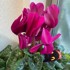 心癒される冬のお花祭り♡