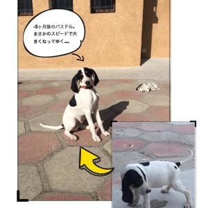 パステルの犬小屋は、屋根がフタの要領で開きます