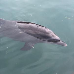 イルカと泳ぐに挑戦!