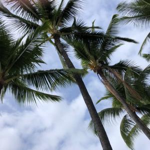 ハワイ島5日目