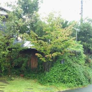 雨の日、開けて入れてもらった。とナメクジ